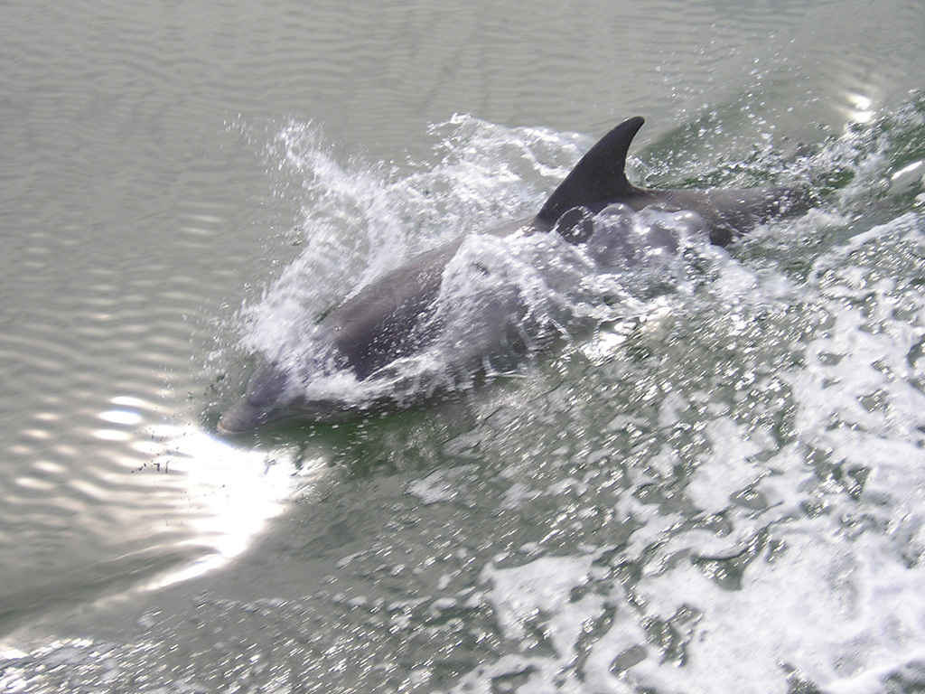 Dolphin alongside the boat
