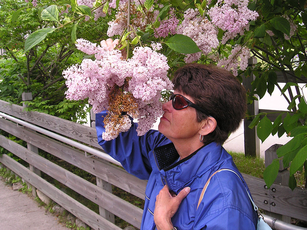 Mavis enjoys the lilacs