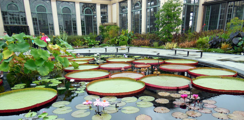 Longwood Lilly Pond